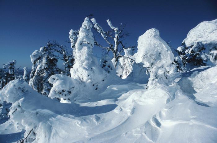 Běh na lyžích - Bruslení nebo klasika?